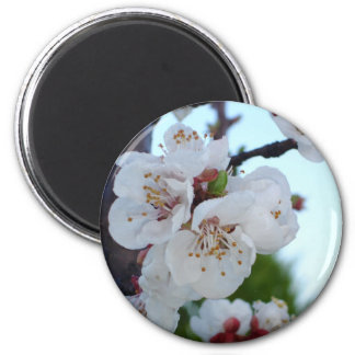Dew On Blossom Magnets