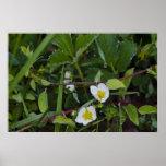 dew-on-flowers-2012-04-28 impresiones