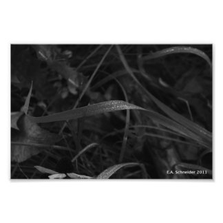 Dew on Grass by E.A. Schneider Photographic Print
