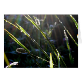Dew on Grass Stationery Note Card