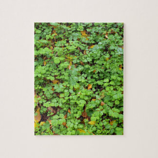 Dew on green plants that grow from the fallen yell jigsaw puzzle