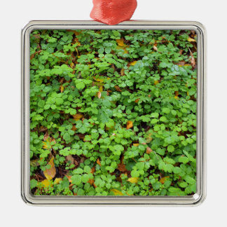 Dew on green plants that grow from the fallen yell square metal christmas ornament