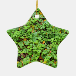 Dew on green plants that grow from the fallen yell Double-Sided star ceramic christmas ornament