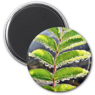 Dew On Rowen Green Leaves Refrigerator Magnet
