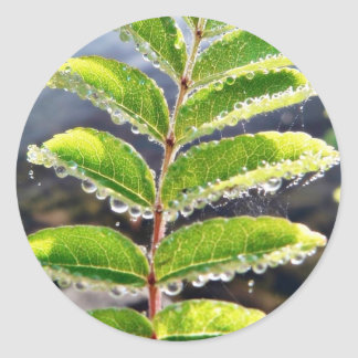 Dew On Rowen Green Leaves Classic Round Sticker