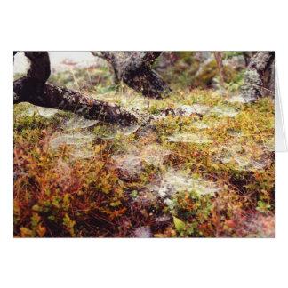 Dew on Spiderwebs Card