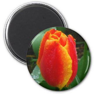 Dew on the Tulip 2 Inch Round Magnet