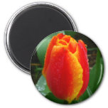 Dew on the Tulip Refrigerator Magnets