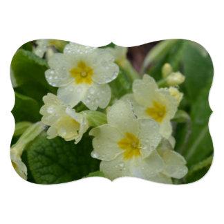 Dew on White and Yellow Primrose 5x7 Paper Invitation Card