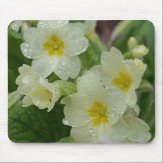 Dew on White and Yellow Primrose Mouse Pad