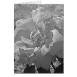 Dew Rose Sympathy Card