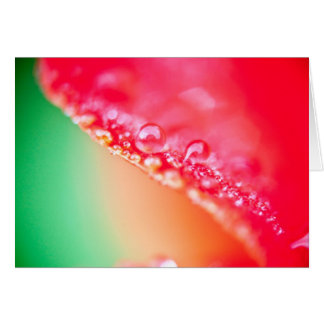dewdrop greeting cards