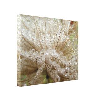 Dewdrop Seed Puff Canvas Print