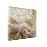 Dewdrop Seed Puff Stretched Canvas Print