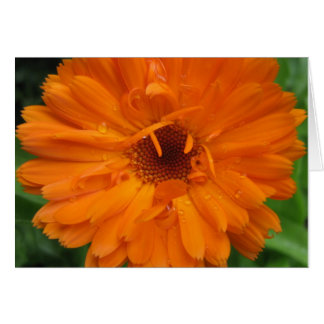 Dewdrops on calendula card