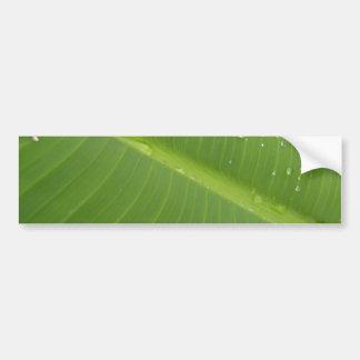 Dewey Banana Leaf 1 Bumper Sticker