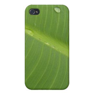 Dewey Banana Leaf 1 iPhone 4 Cover
