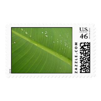 Dewey Banana Leaf 1 Postage Stamps