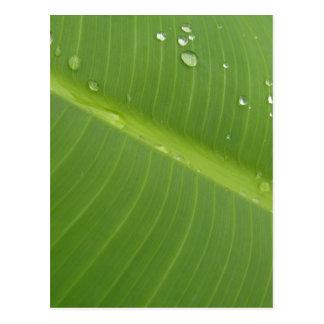 Dewey Banana Leaf 1 Postcards