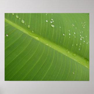 Dewey Banana Leaf 1 Print