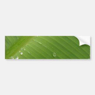 Dewey Banana Leaf 2 Bumper Sticker