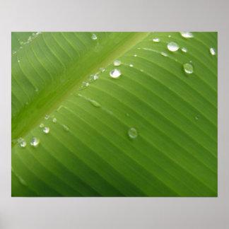 Dewey Banana Leaf 2 Poster