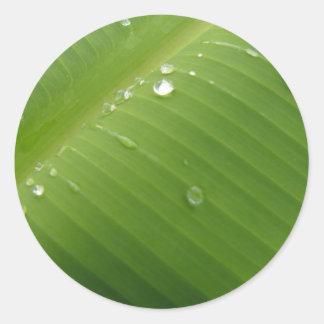 Dewey Banana Leaf 2 Round Sticker
