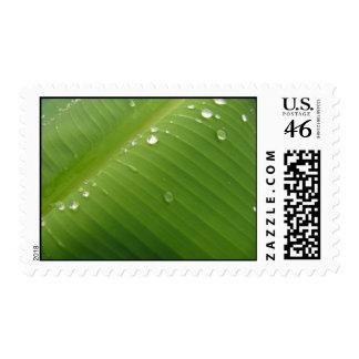 Dewey Banana Leaf 2 Stamp