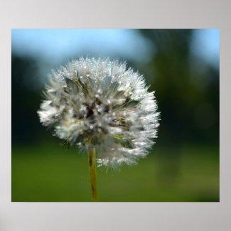 dewey dandelion 2 zazzle_print