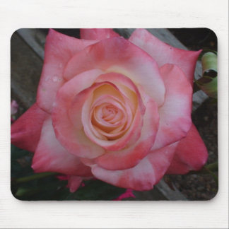 Dewy Pink Rose Mouse Pad