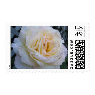 Dewy Rose Postage