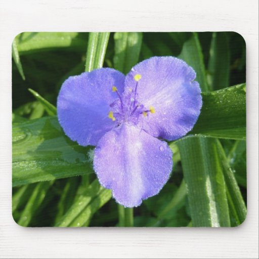 Dewy Trillium Blue-Purple Spring Wildflower Mouse Pad