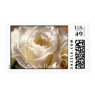 Dewy white Rose , Save the Date stamp