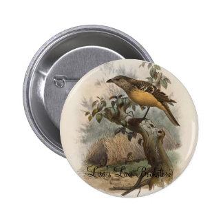 DG Elliot - Chlamydodera cervineiventris - Buff-br Pinback Button