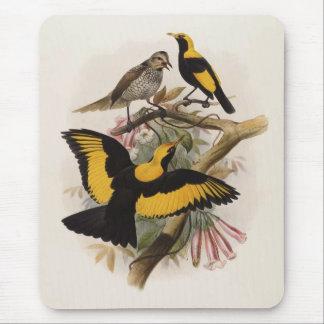 DG Elliott - Sericulus melinus - Regent Bower-bird Mouse Pad