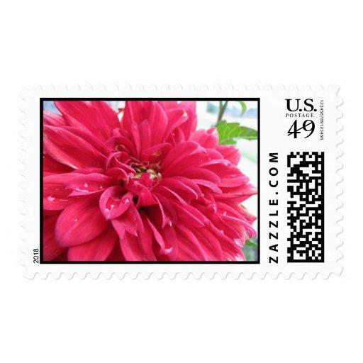 dhalia stamps