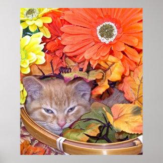 Di Milo, gato soñoliento del gatito, colores de la Poster