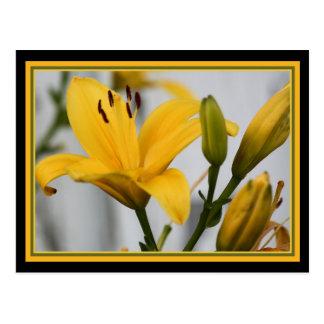 Día amarillo Lillies Postal