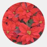 Día de fiesta rojo del navidad de los Poinsettias Pegatina Redonda