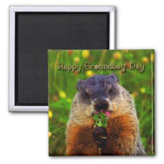 Día de la marmota feliz que come la flor imanes para frigoríficos