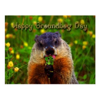 Día de la marmota feliz que come la flor tarjeta postal