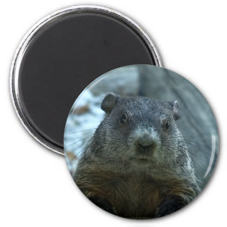 ¡Día de la marmota! Iman