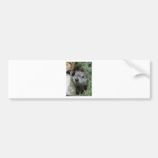 Día de la marmota pegatina para auto