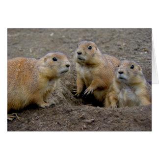 Día de la marmota tarjeton
