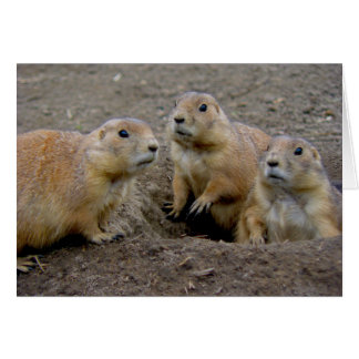 Día de la marmota felicitacion