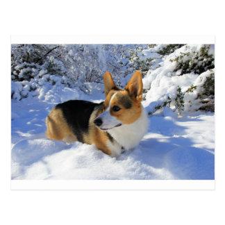 Día de la nieve del Corgi Galés Tarjetas Postales