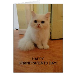 Día de los abuelos, gato blanco tarjeta de felicitación