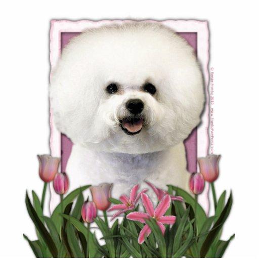 Día de madres - tulipanes rosados - Bichon Frise Escultura Fotográfica