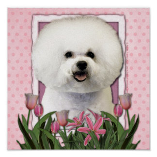 Día de madres - tulipanes rosados - Bichon Frise Poster