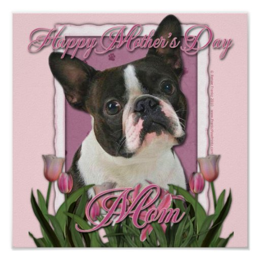 Día de madres - tulipanes rosados - Boston Terrier Posters